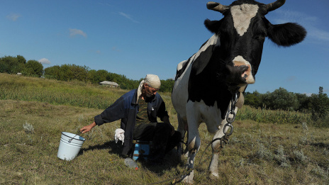 Voronezh Region takes 4th place in milk production in Russia