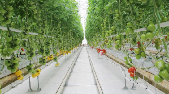 "New greenhouse ""Eco-culture"" to open in Voronezh Region in Summer of 2020"